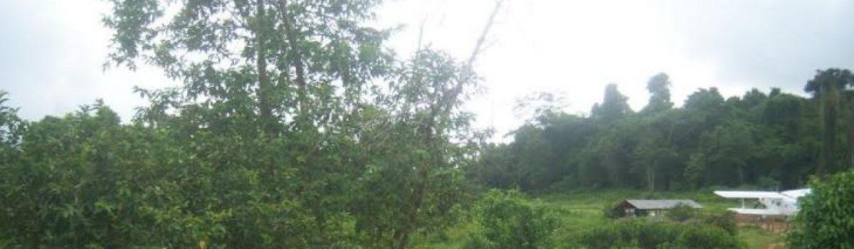 Arco Minero del Orinoco incluye despliegue de Plan de Remediación Ambiental