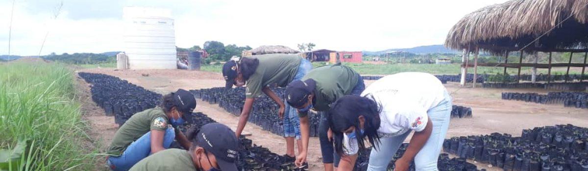 Estudiantes de Chamba Juvenil Minera sembraron 2mil semillas de merey
